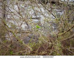 tree pest stock images royalty free images vectors