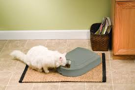 11 cat feeders that make feeding your cats easy petslady com