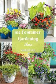 1203 best gardening images on pinterest gardening flowers and