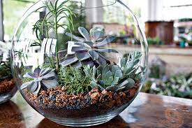 a new twist on terrariums state by state gardening