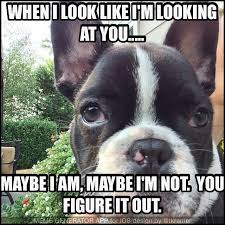 French Bulldog Meme - 15 pictures that sum up what it s like to own a french bulldog