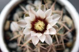 free images flower petal botany succulent closeup flora