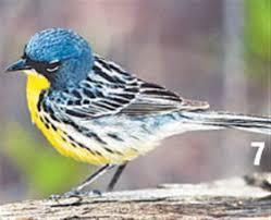 Ohio birds images Northwest ohio is a key stopover for many migrating birds the blade jpg