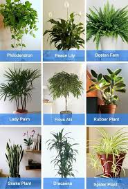 best plants for air quality best plants for bedroom air www indiepedia org