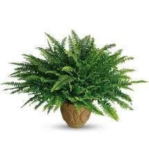 benefits of houseplants benefits of houseplants