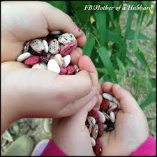 Gifts For Vegetable Gardeners by Heirloom Seed Gifts For Children And New Gardeners