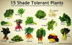 best grow lights for vegetables best vegetables to grow in shade 3 6 hrs of sun minneapolis