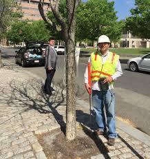 gas leaks a hidden culprit for dead trees stateimpact pennsylvania