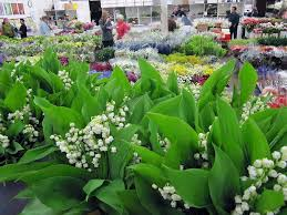 flowers san francisco san francisco flower mart home