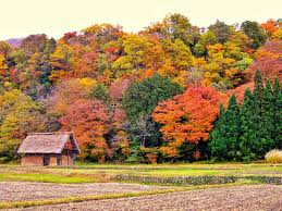 best air bnbs 14 airbnbs for spotting fall foliage tasting table