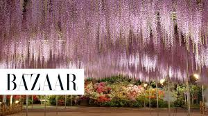 japan flower tunnel this wisteria flower tunnel in japan is the most magical place ever