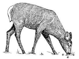 file animal line art drawing jpg wikimedia commons