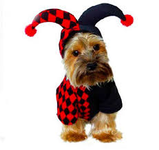 Funny Dog Halloween Costumes Dog Halloween Costumes 10 Hilarious Halloween Customs