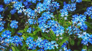 free images nature blossom flower bloom floral spring