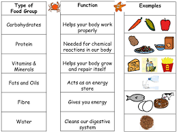 intro to food groups and differentiated worksheets by seasquirt