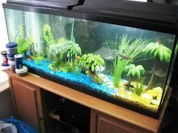aquarium decoration ideas freshwater bathroom tall fish tank decoration ideas for aquarium d at home