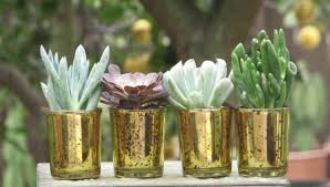 mini plants 50 wedding favors mini plants in gold glass containers 2 inch