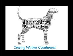 bluetick coonhound gifts best 25 treeing walker coonhound ideas on pinterest walker