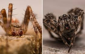 Are Spiders Attracted To Light 13 Ways To Spider Proof Your Home