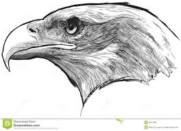 bald eagle stock vector image of national freedom feathers