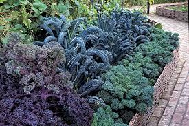 crop rotation rhs gardening