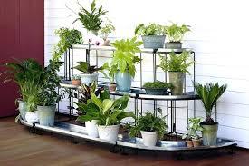 indoor plant display indoor plant display stands ideomotor club