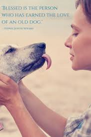 Quotes On The Love Of God by Best 25 Old Dog Quotes Ideas On Pinterest I Love Dogs Pet