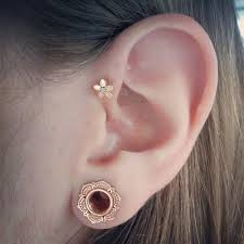 spacer earrings prettiest gauges i seen i may just be converted to the
