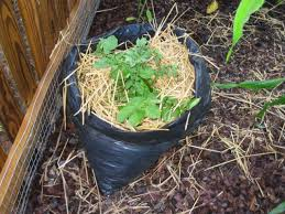 How To Grow Vegetables by How To Grow Potatoes In A Trash Bag How Tos Diy