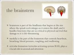 Part Of Brain That Controls Arousal The Brain Parts And Functions