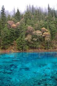 Beautiful Plants by Free Stock Photo Of Beautiful Trees Along Cyan Blue Lake
