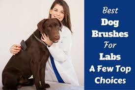 best dog brush for labs a look at a few top choices