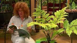 Blog 2 Fern Blog 2 6 Tree Ferns Youtube