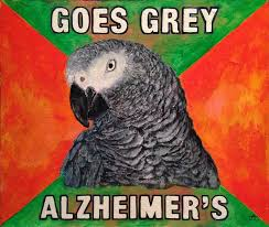 Paranoid Parrot Memes - cartwheel art 盪 meme democracy at illuminoidal arts don t worry