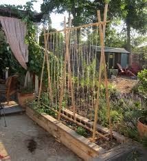 Trellis Garden Ideas Yes We Do The Pinterest Thing Root Simple