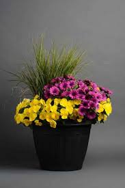 117 summer containers images garden container