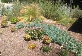 drought tolerant landscaping ideas easy drought tolerant