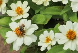 free images nature blossom petal honey pollen green color