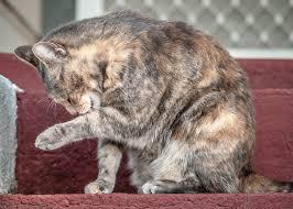 veterinary assistant tips archive animal behavior college