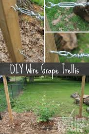 building a diy wire trellis