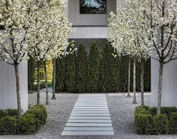 small trees landscaping houzz