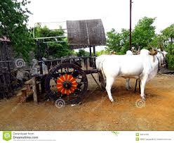 indian cart indian bullock cart stock image image of traditional 45616183