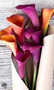 Purple Lillies 57 Best Calla Lilies Images On Pinterest Calla Lillies