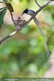 top 25 wild bird photographs of the week 74 u2013 national geographic