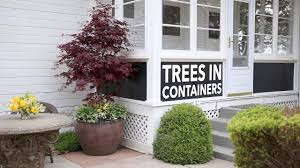 can i plant a tree in a container garden answer