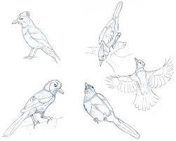bird drawings of mine the art posse