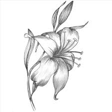 rose in pencil sketch of rose rose drawings in pencil outline