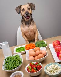 dog nutrition 5 healthy dog friendly human foods pawsh magazine