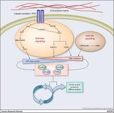 mechanisms of cancer cell dormancy u2014another hallmark of cancer