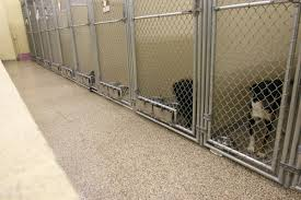 kennel flooring floors for kennels clean kenneled floor systems